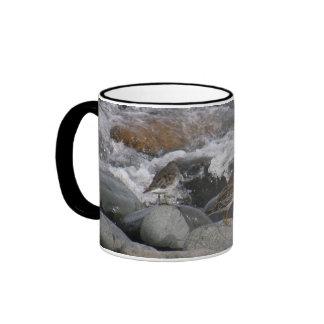 Lavandera de la roca (ptilocnemis del Calidris) Tazas