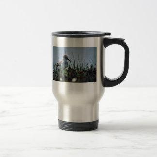 Lavandera occidental taza de café