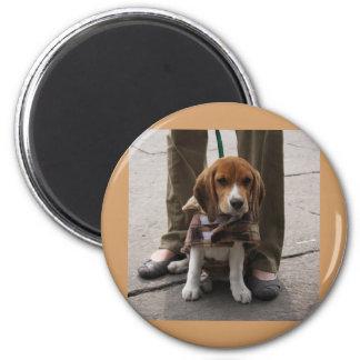 Lazo del perrito del beagle imán redondo 5 cm