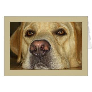 Le falto - Labrador amarillo lindo Tarjeta