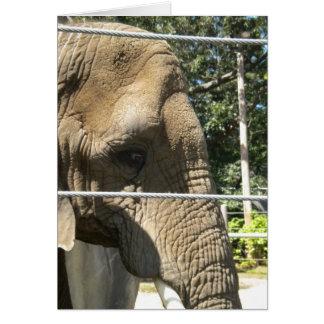 Le falto, nos dejé hacer el almuerzo, elefante tri tarjeta de felicitación
