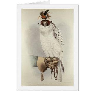 Le Groenlandais, Faucon Blanc Mue, del 'tratado de Tarjeta De Felicitación