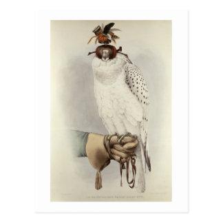 Le Groenlandais, Faucon Blanc Mue, del 'tratado de Postal