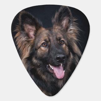Leal lindo Alsatian del perro de pastor alemán Púa De Guitarra