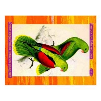 Lear. Parakeet Carmesí-con alas. Varón femenino y Postal