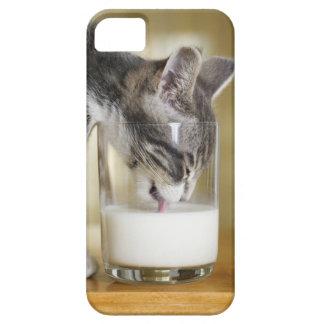 Leche de consumo del gatito del vidrio funda para iPhone SE/5/5s