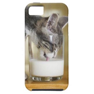 Leche de consumo del gatito del vidrio iPhone 5 coberturas
