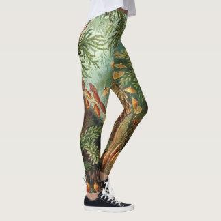Leggings Plantas del musgo del vintage de Ernst Haeckel,