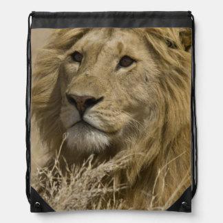 León africano, Panthera leo, retrato de a Mochilas