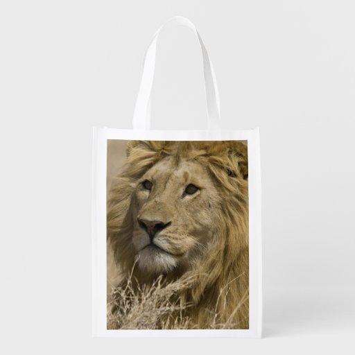 León africano, Panthera leo, retrato de a Bolsas Para La Compra