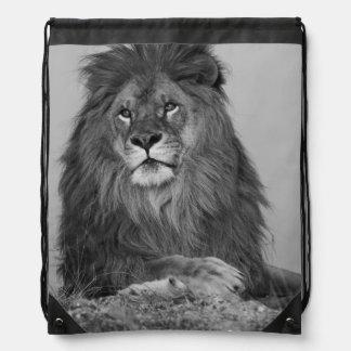 León africano que descansa sobre el acantilado de  mochila