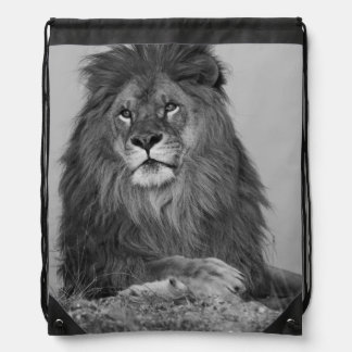 León africano que descansa sobre el acantilado de mochilas