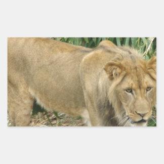 León africano rectangular pegatinas