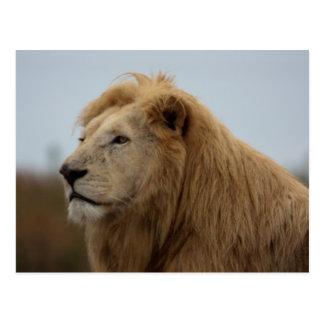 León blanco - postal