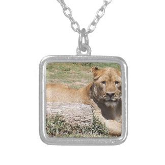 León Collar Plateado