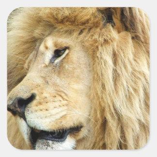 León con los pegatinas gruesos de la melena calcomanía cuadrada personalizada