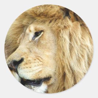 León con los pegatinas gruesos de la melena pegatina redonda