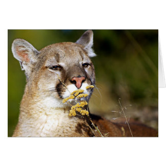 León de montaña - oler las flores tarjeta de felicitación