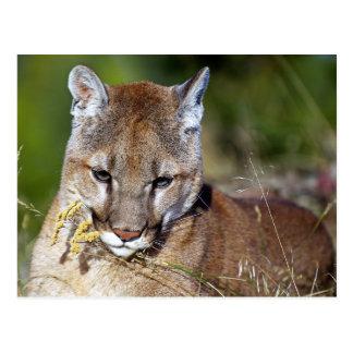 León de montaña que juega con las flores tarjeta postal