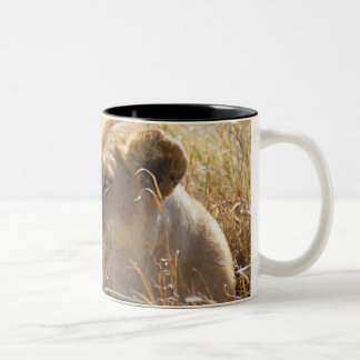 León en la colocación en la alta hierba de taza de café de dos colores