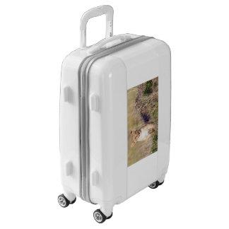 León joven maletas