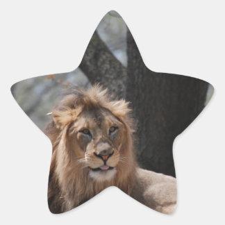 León lindo