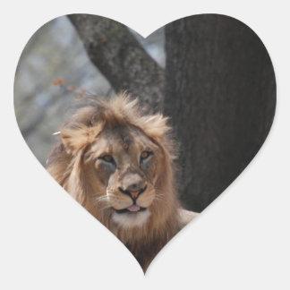 León lindo calcomanía corazón personalizadas