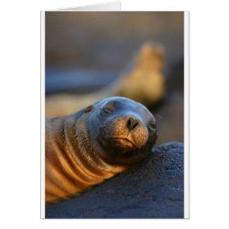 León marino perezoso tarjeta de felicitación