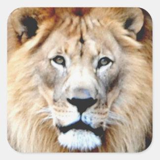 León masculino calcomania cuadradas personalizada
