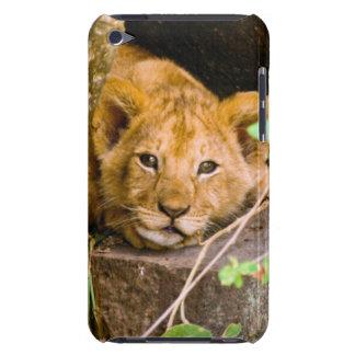 León (Panthera Leo) Cub en la cueva, Maasai Mara iPod Touch Cobertura
