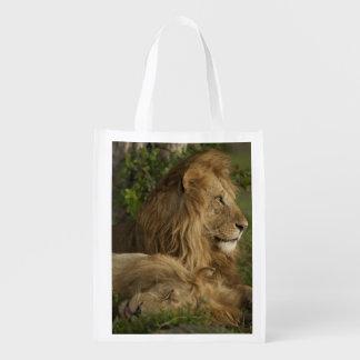 León, Panthera leo, una Mara más baja, Masai Mara  Bolsas Reutilizables