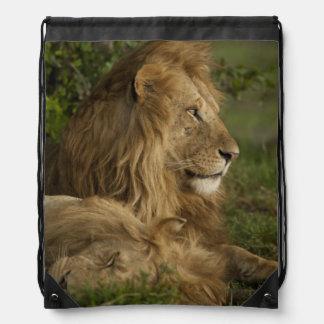 León, Panthera leo, una Mara más baja, Masai Mara Mochila