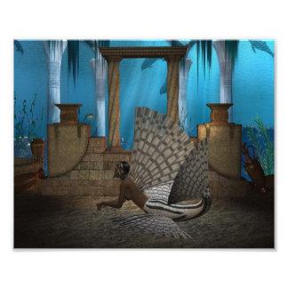 Leona del mar fotos