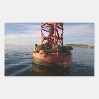 Leones marinos que se relajan en una boya en Dana Pegatina Rectangular