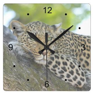 Leopardo de reclinación reloj cuadrado