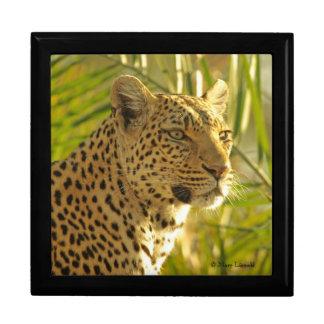 Leopardo en hojas de palma cajas de joyas
