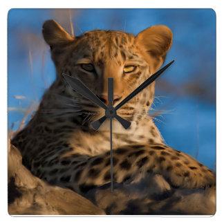 Leopardo en roca reloj cuadrado