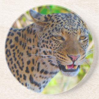 Leopardo manchado posavasos