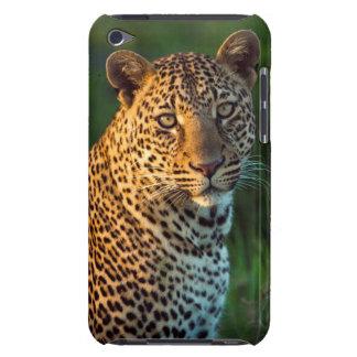 Leopardo masculino (Panthera Pardus) Cub maduro iPod Case-Mate Cobertura