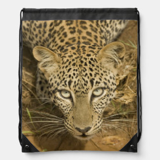 Leopardo, pardus del Panthera, bebiendo de a Mochilas