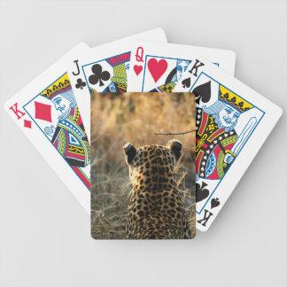 Leopardo que mira apagado en distancia baraja de cartas bicycle