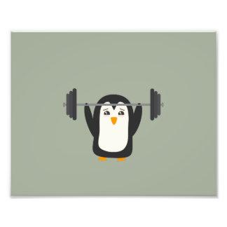 Levantamiento de pesas del pingüino fotografías