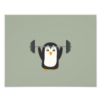 Levantamiento de pesas del pingüino fotos