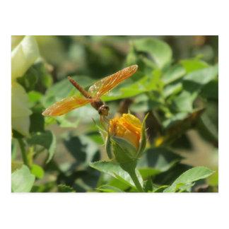 Libélula anaranjada en capullo de rosa amarillo postal