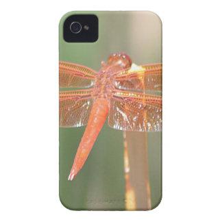 Libélula Carcasa Para iPhone 4