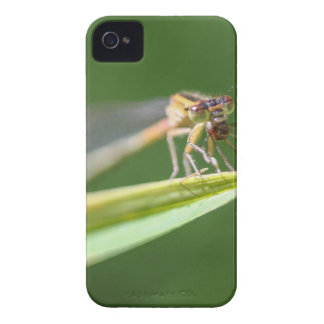 Libélula que come el mosquito carcasa para iPhone 4 de Case-Mate