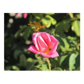 Libélula y mariquita en color de rosa rosado postal