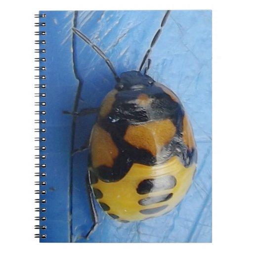 Libreta Con Fotos (80 Páginas) Escarabajos