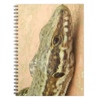 Libreta Con Fotos (80 Páginas) Lagartijas