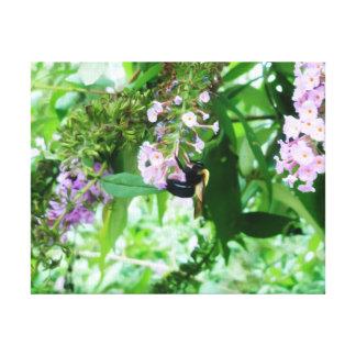 Lienzo Abeja de carpintero del este en la flor de Salvia